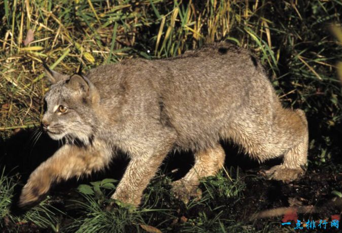 【图】中国八大野生动物自然景区 都江堰排第一